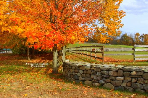 farm-wall-autumn