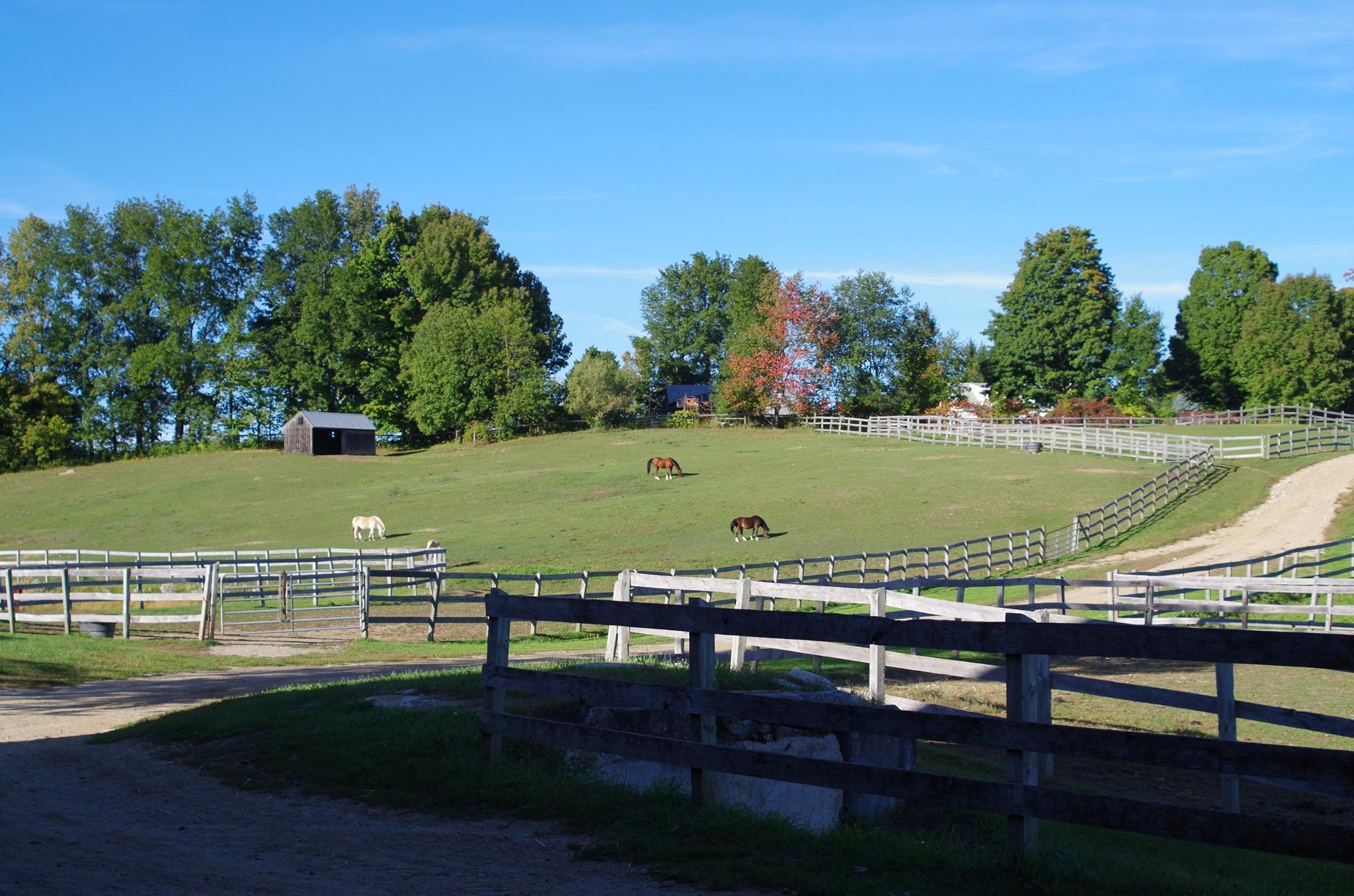 hill-herd